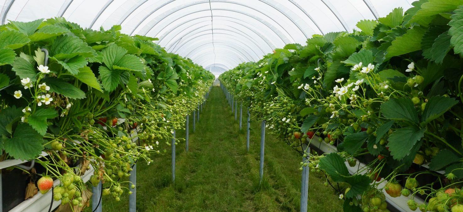 Foxberry Fruit Farm